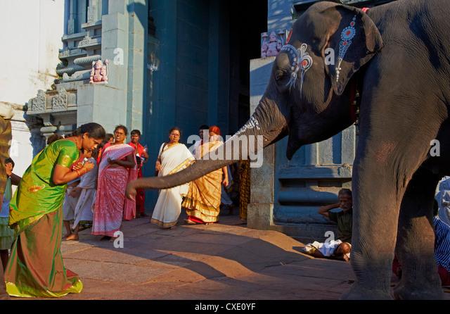 Elephant benediction, Kamakshi Amman, Kanchipuram, Tamil Nadu, India, Asia - Stock Image