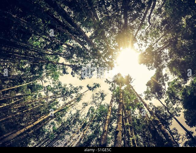 Nature Speaks - Stock-Bilder