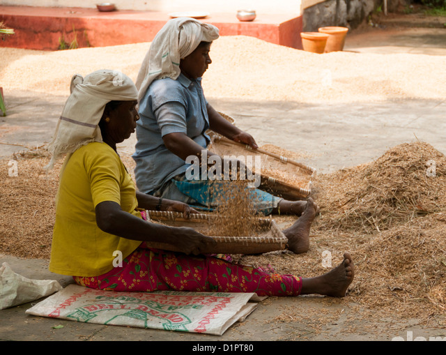 Two women winnowing the chaff - method developed by ancient cultures for separating grain from chaff - Stock-Bilder