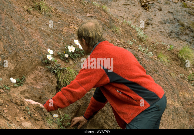 Botanists stock photos botanists stock images alamy - Gloriette fer smeden ...
