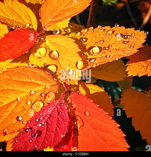 Wet Leaves - Stock Image