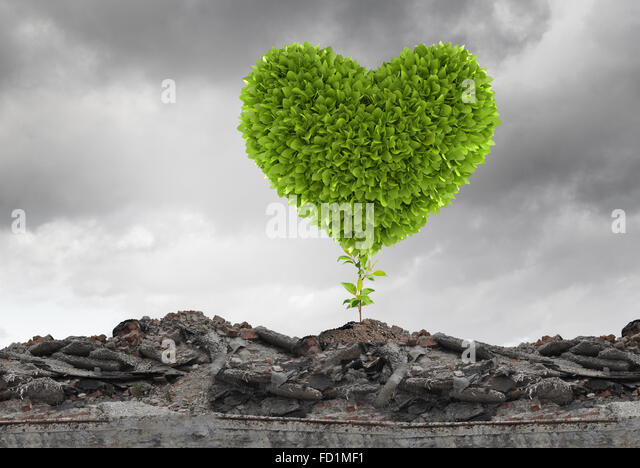 Conceptual image with green heart growing on ruins - Stock Image