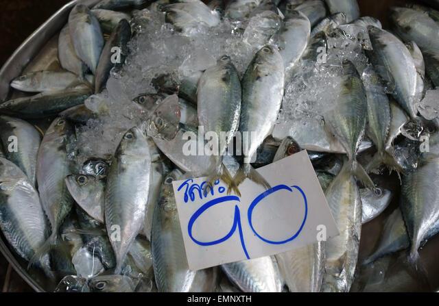 Chub mackerel on ice for 90 baht on a stall in a Bangkok food market, Thailand - Stock Image