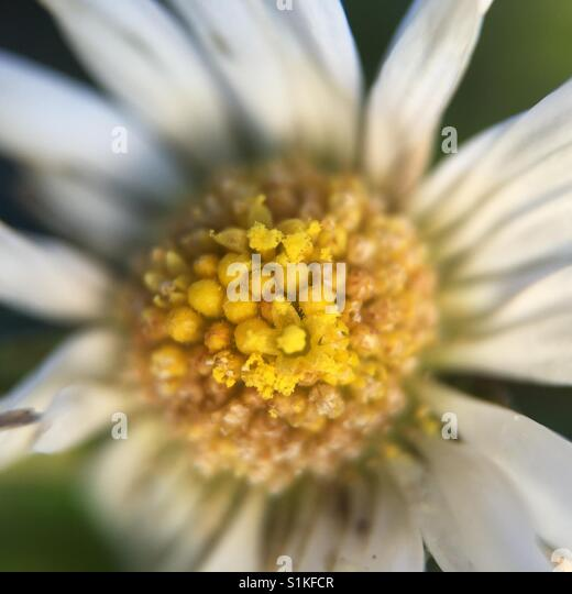 Macro flower - Stock Image