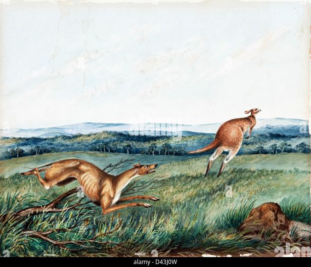 Adam Gustavus Ball, Dog chasing a kangaroo 1872 Watercolor. Art Gallery of South Australia - Stock Image