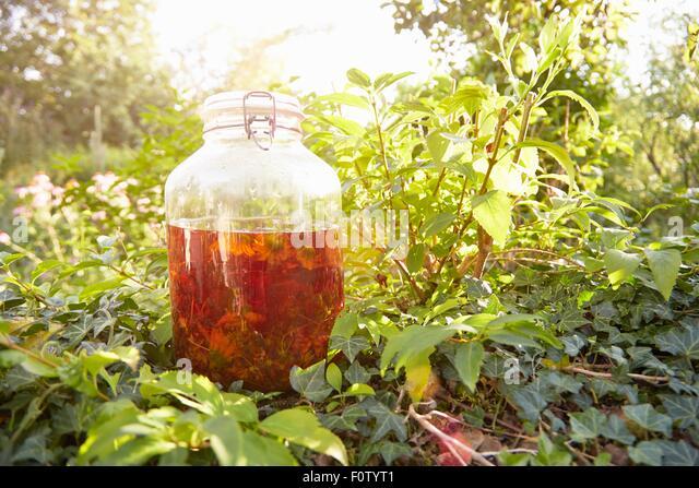 Jar of arnica flowers in herb garden - Stock Image