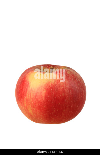 Apple (Malus), Baumanns Renette cultivar - Stock Image