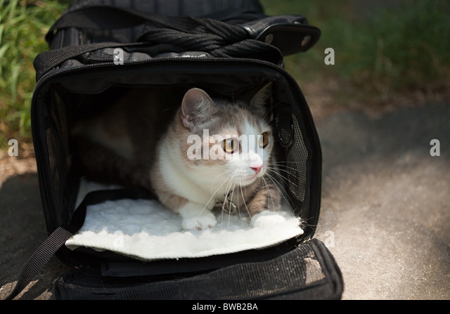 Cat in a pet carrier - Stock Image