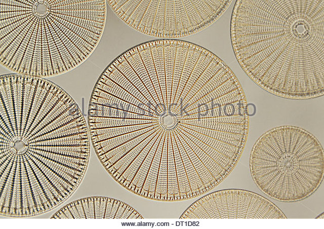 Harvard University Boston Massachusetts USA Diatoms Farlow Herbarium Harvard University - Stock Image