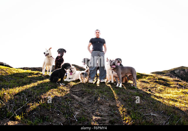 heroic forward facing eye contact Ceasr Millan Dog Whisperer famous TV celebrity trainer dog pack grassy hillside - Stock Image