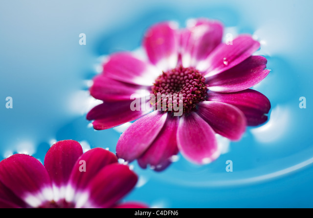 flowers in water - Stock Image