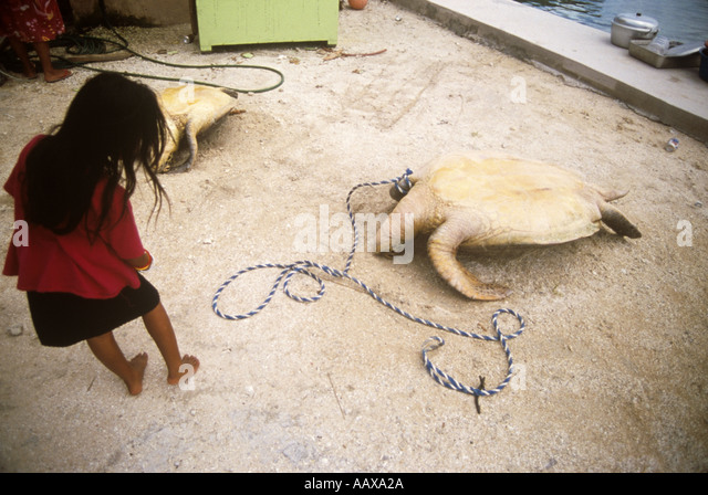 girl and turtles caught for food in the western pacific Matt Harris - Stock Image