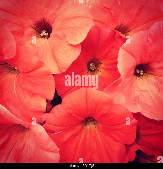Red flowers - Stock Image