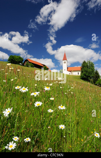 Church and farmhouse standing in a flower meadow, Carinthia, Austria, Europe - Stock Image