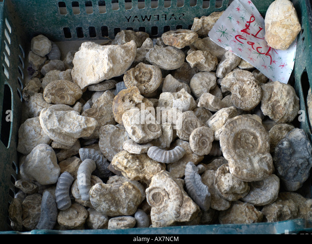Cheap fossils - Stock Image