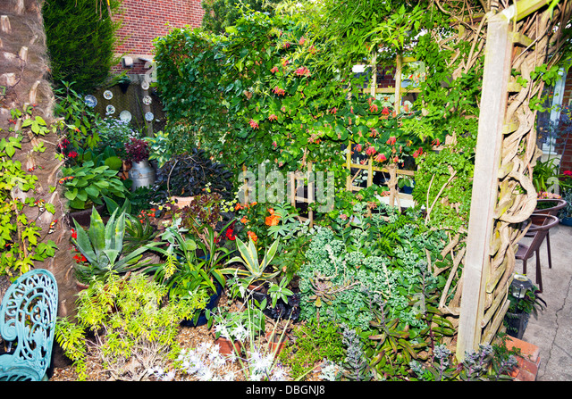 Plants trellis stock photos plants trellis stock images for Typical landscaping plants