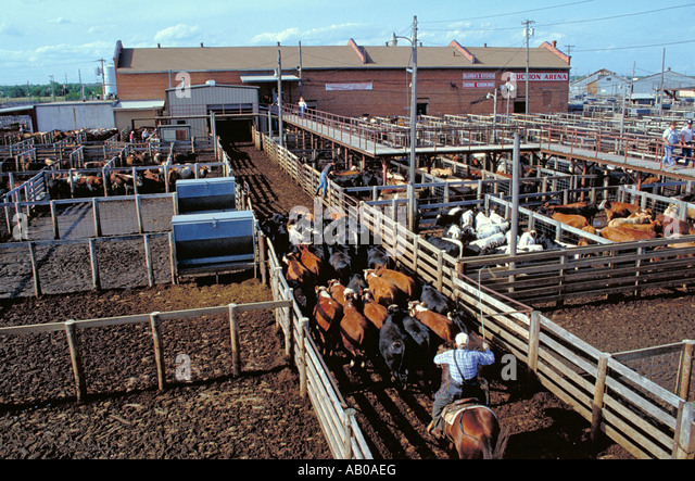 national stock yards guys Find the best national stock yards wedding photographers weddingwire offers reviews, prices and availability for wedding photographers in national stock yards.