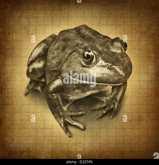 Frog on an old grunge parchment texture as a symbol of conservation and protecting wildlife and all of nature for - Stock Image
