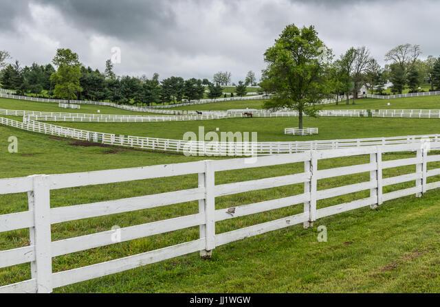 Horse Paddocks with White Fences on overcast day - Stock Image