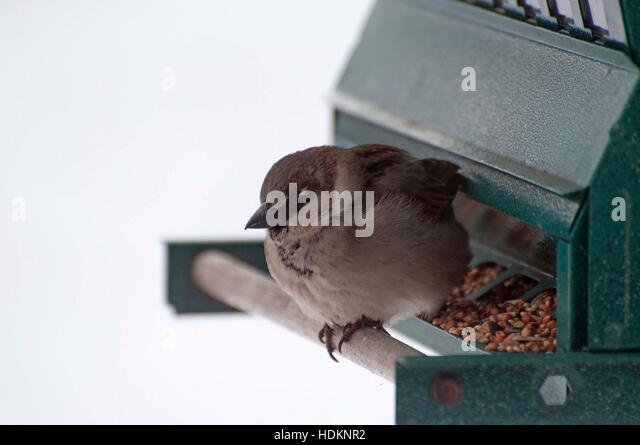 Usa winter bird stock photos usa winter bird stock for Apache mexican cuisine galveston