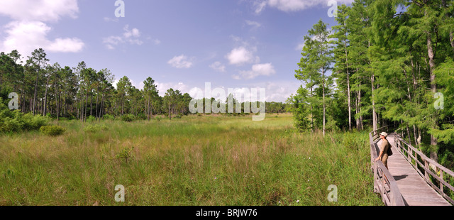Woman looking at the view from a wooden walkway in a swamp sanctuary in Florida. - Stock Image