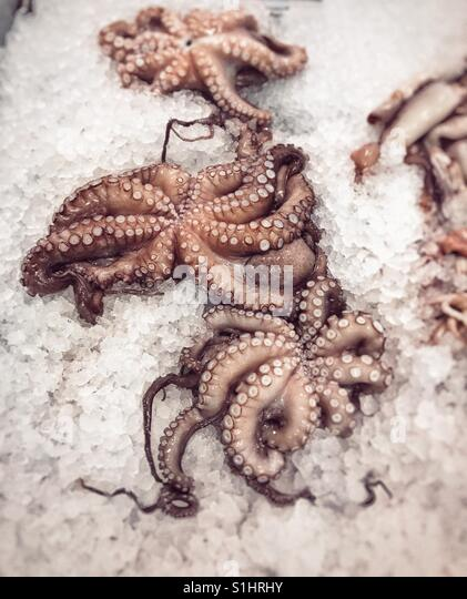 Octopi in a supermarket display - Stock Image