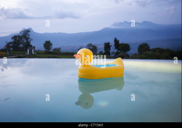Duck floating in still swimming pool - Stock Image
