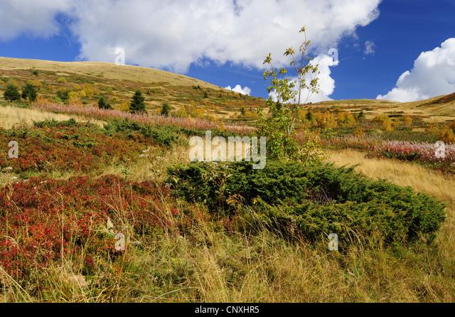 mountain meadow autumn above - photo #33