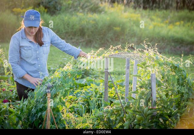 USA, Maine, Woman in organic garden - Stock Image