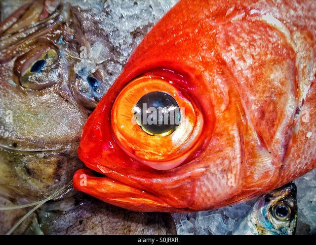 Close up of red fish for sale - Stock Image