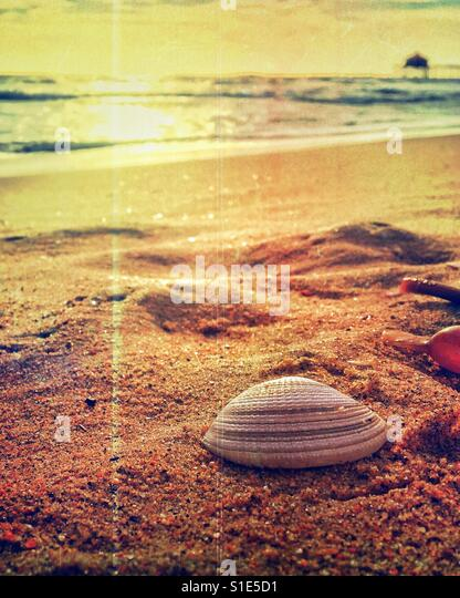 Close up of a white seashell on a sandy beach at sunset. Edit with light leaks. - Stock-Bilder