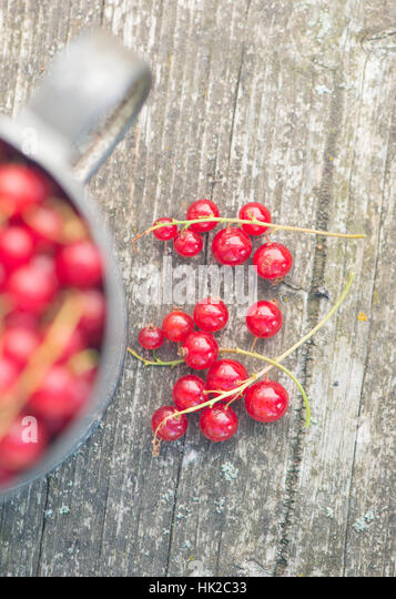 Freshly picked red currant berries on wooden table. Garden harvest detail. - Stock-Bilder