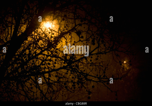 A plane tree in an ominous fog - Stock Image