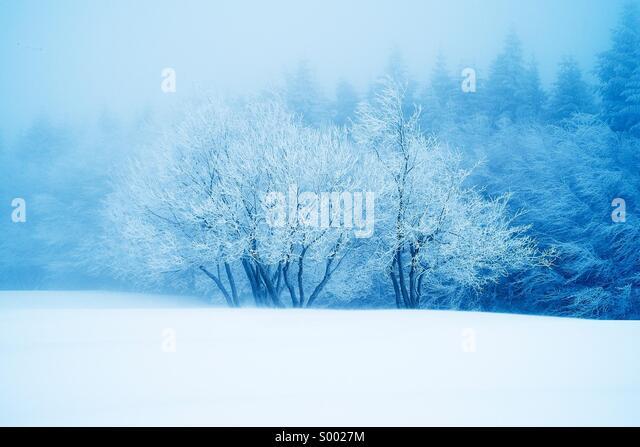 Snow - Stock Image