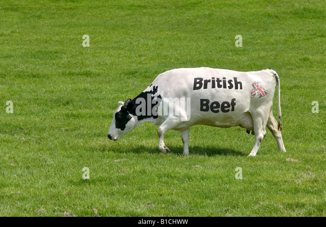 Concept image of a cow with the words British Beef as its markings and a union jack map of the UK - Stock Image