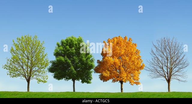 Tree 4 seasons Baum 4 Jahreszeiten - Stock-Bilder