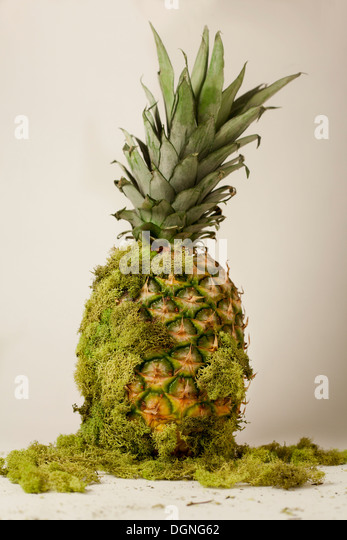Pineapple with moss - Stock Image