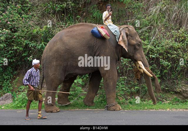Thekkady Animal Stock Photos & Thekkady Animal Stock ...