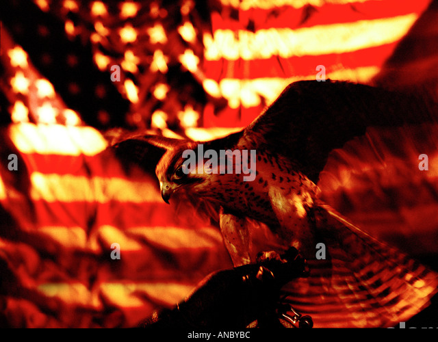 Falcon Flying and US Flag - Stock Image