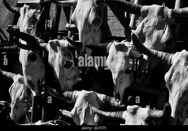 Black and white cow skulls on wall. - Stock Image