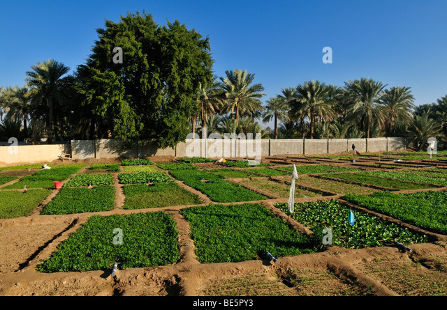 north garden middle eastern singles Middle east & north africa  the statistics make for grim reading: at least one disaster occurs every single day learn how to build better national resilience.