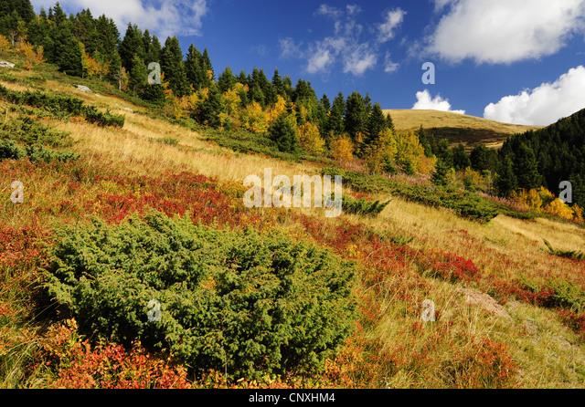 mountain meadow autumn above - photo #15