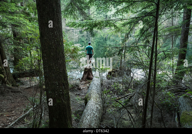 Man standing in forest, Buntzen Lake, British Columbia, Canada - Stock Image