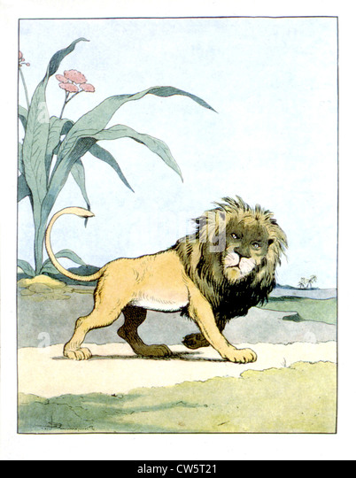 Lion - Stock Image