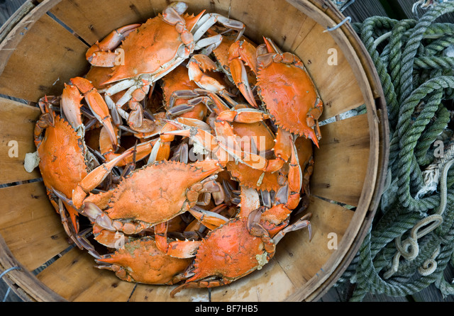 bushel-basket-of-crabs-BF7HB5.jpg