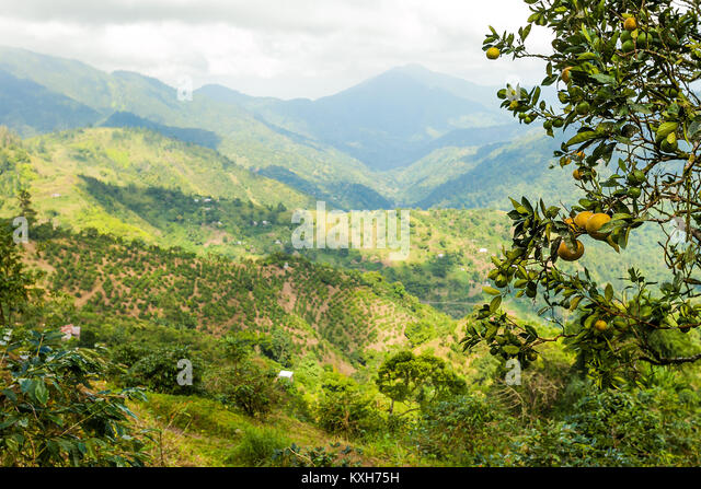 blue-mountains-of-jamaica-where-coffee-i