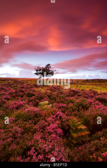 Spectacular colours in the sky and on the moor at Dunkery Hill in Exmoor National Park Somerset England - Stock-Bilder