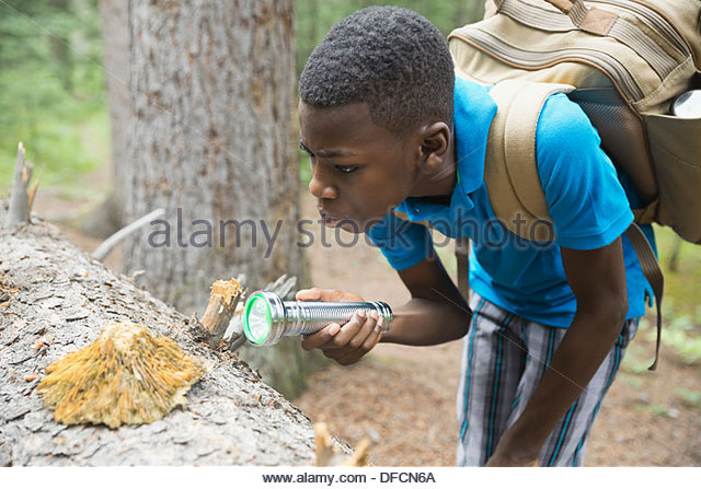 Boy examining fungus on tree trunk in forest - Stock Image