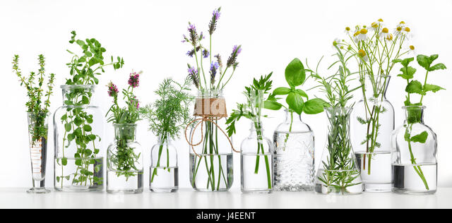 Bottle of essential oil with herbs on white background - Stock Image
