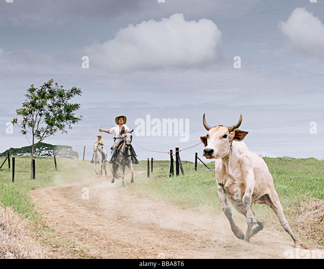 Escaped bull being lassoed in Colombia, South America - Stock Image